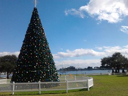 Christmas Tree Cerca Pier